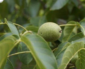 Phyto-Progesteron kommt in vielen Pflanzen vor
